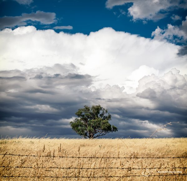 Australian Lonely Tree and Cumulonimbus