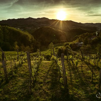 Sunset in Vineyard Slovenia