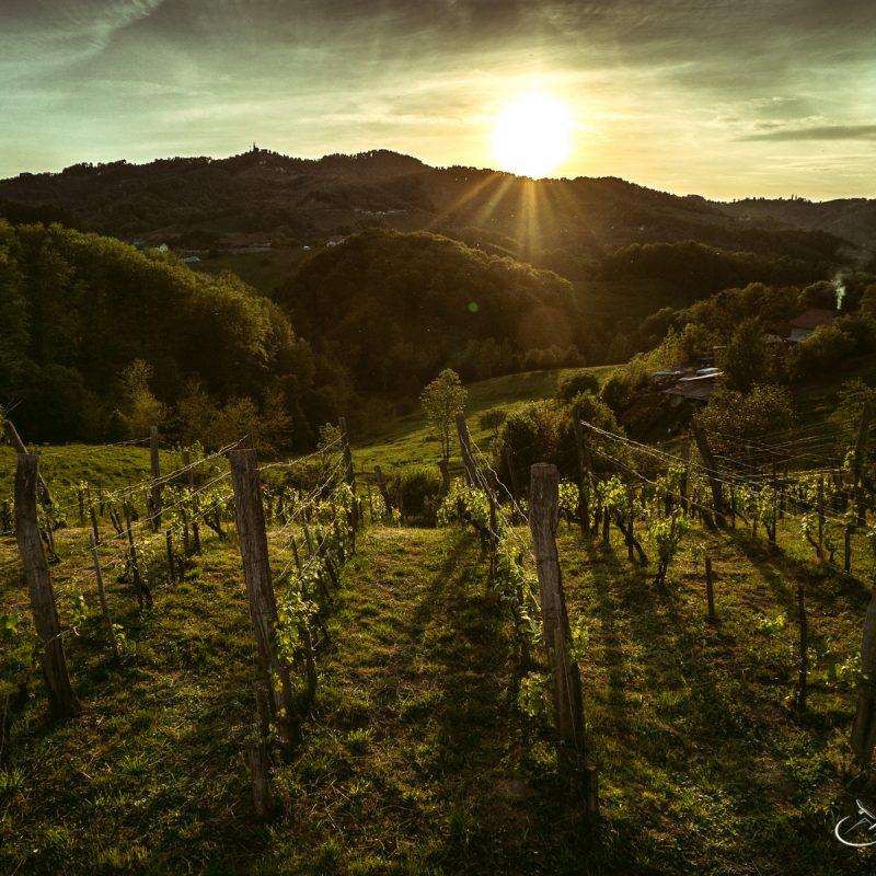 Sunset in Vineyard Slovenia