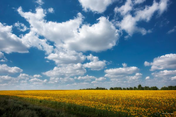 How nice is this yellow color of endless southern Russian fields!?