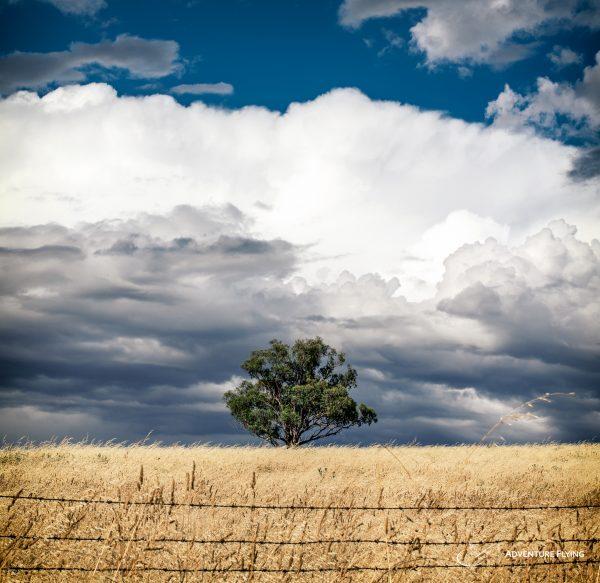 Australian Lonely Tree and Cumulonimbus