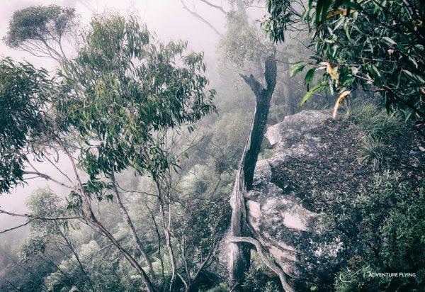 Australia Tongarra Forest NSW